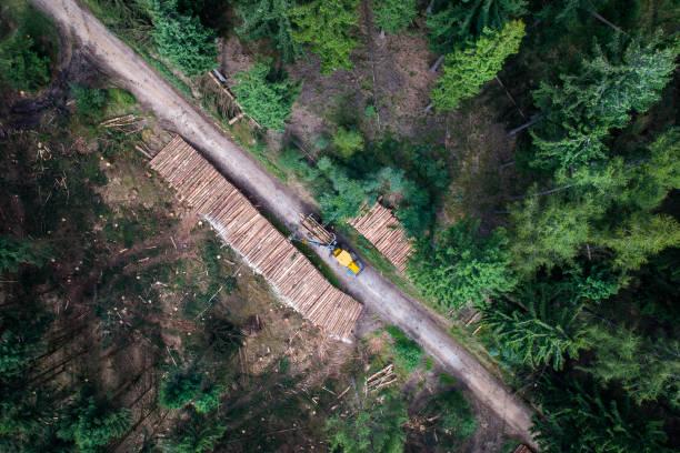 숲-청소 작업에에서 폭풍 피해 - 목재 공업 뉴스 사진 이미지