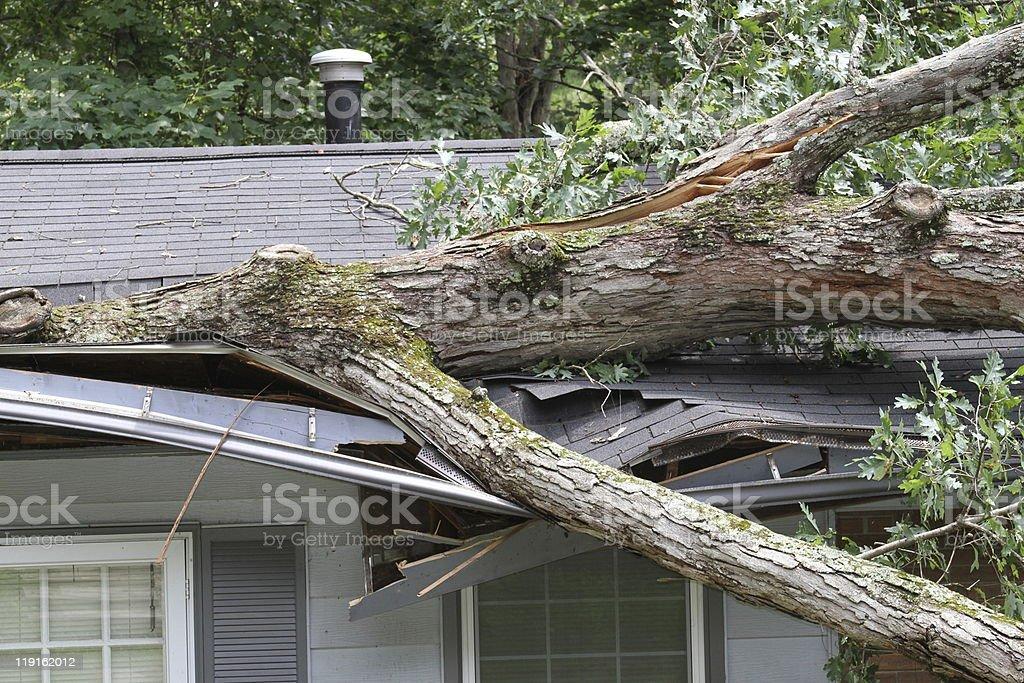 Storm Damage Large white oak tree punctures roof on house Damaged Stock Photo