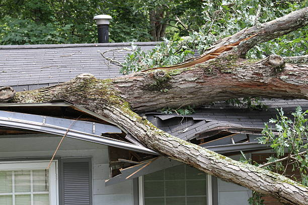 storm damage - storm stock photos and pictures