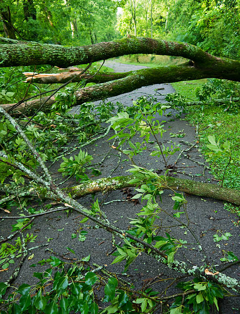 Storm Damage Fallen trees on a paved path after severe thunderstorm knocked down stock pictures, royalty-free photos & images