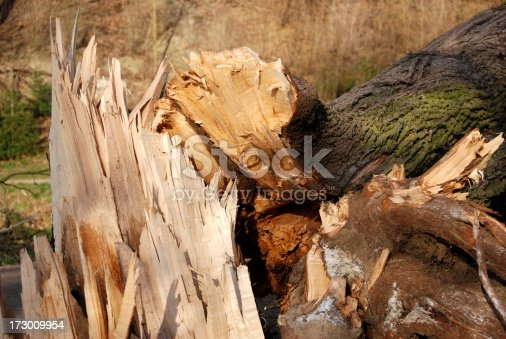 Storm damage - broken tree