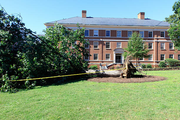 Storm damage Tree knocked down by a hurricane in front of a red brick apartment building fallen tree stock pictures, royalty-free photos & images