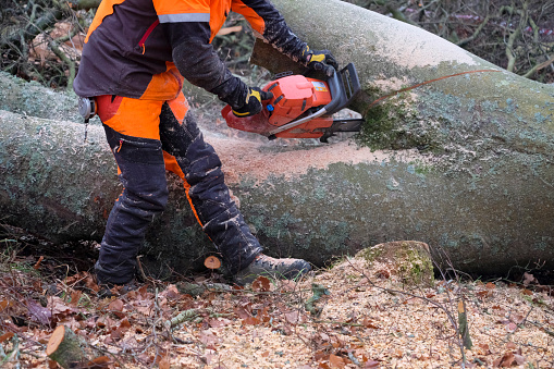 istock Storm damaged fallen tree being cleared by a tree surgeon 1202261135