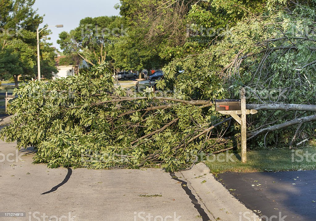storm damaged tree blocks road stock photo