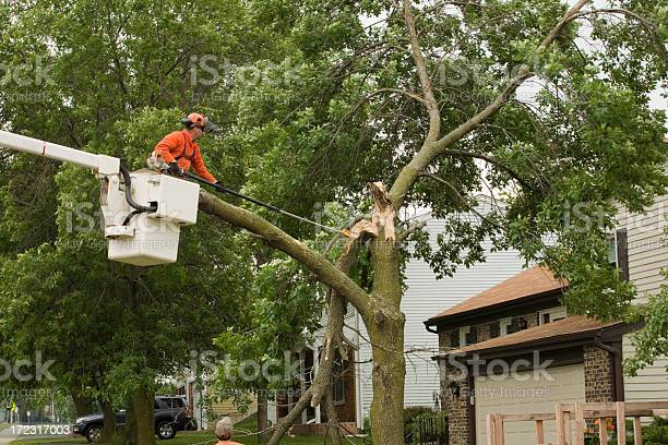 Photo of Storm damaged tree gets cut