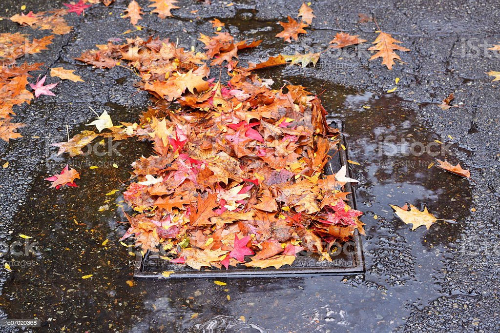 Storm drain partially blocked by fallen leaves stock photo