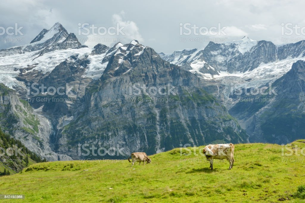 Storm is coming in Swiss Alps stock photo