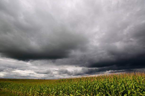 Storm over corn fields stock photo