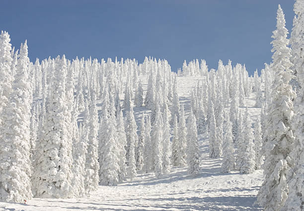 Storm Peak 3 Trees coated by an overnight snowstorm on Storm Peak, Steamboat Springs, CO. steamboat springs stock pictures, royalty-free photos & images