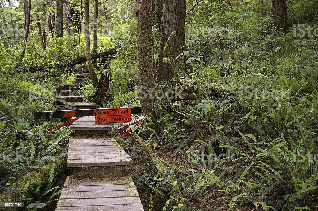 Storm-Damaged Trail royalty-free stock photo