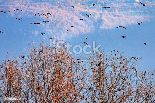 Stormo di uccelli che si alzano in volo da una pianta con lo sfondo del cielo blu e nuvole sopra Acquasparta