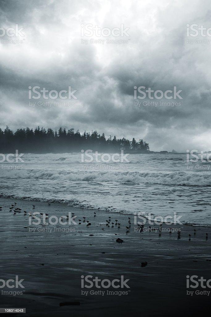 Stormy Beach, Toned stock photo