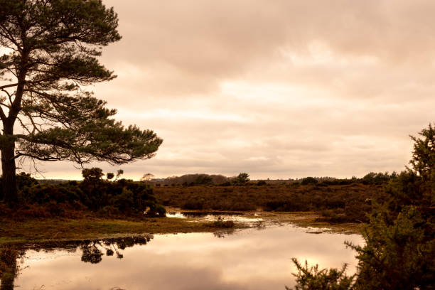 Stormy clouds over lake and trees in New Forest countryside stock photo