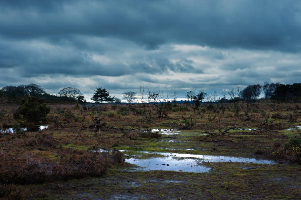Stormy clouds over New Forest countryside stock photo