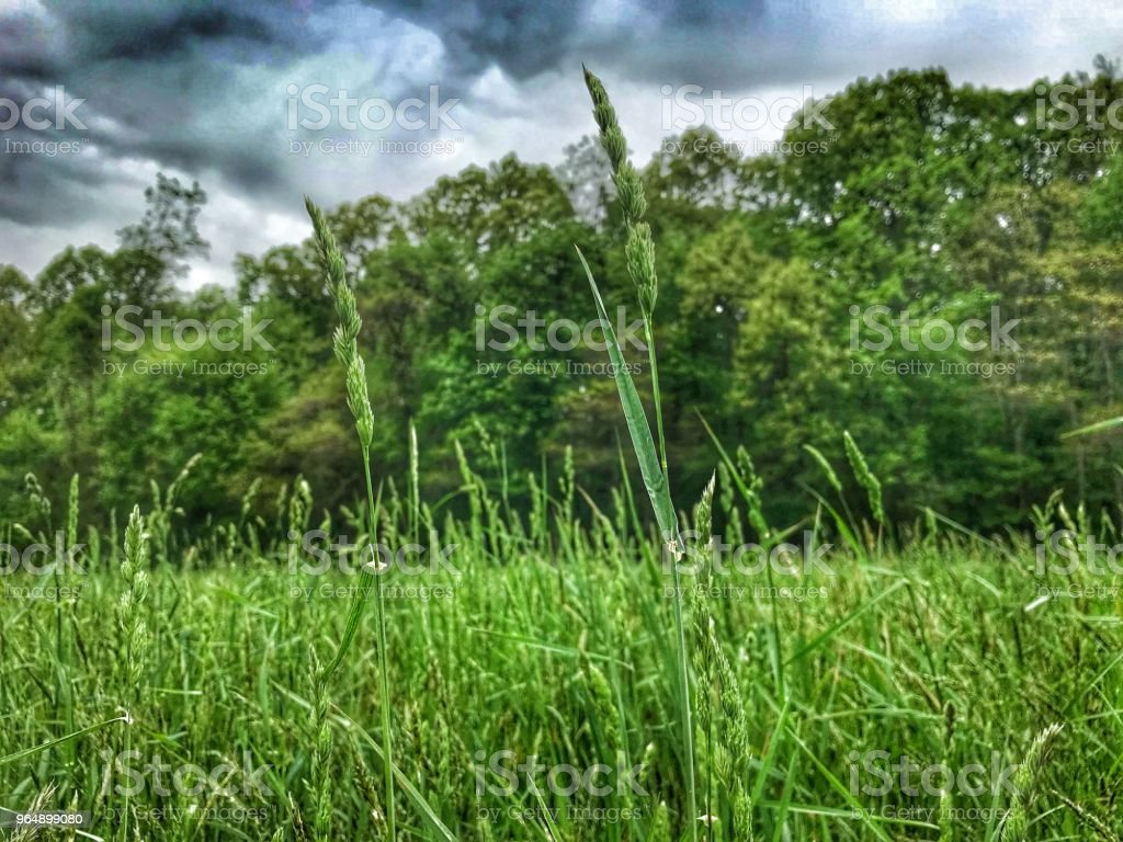 Stormy Field - Royalty-free Agricultural Field Stock Photo