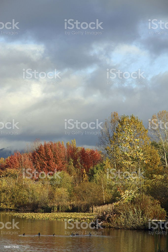 Stormy Lake royalty-free stock photo