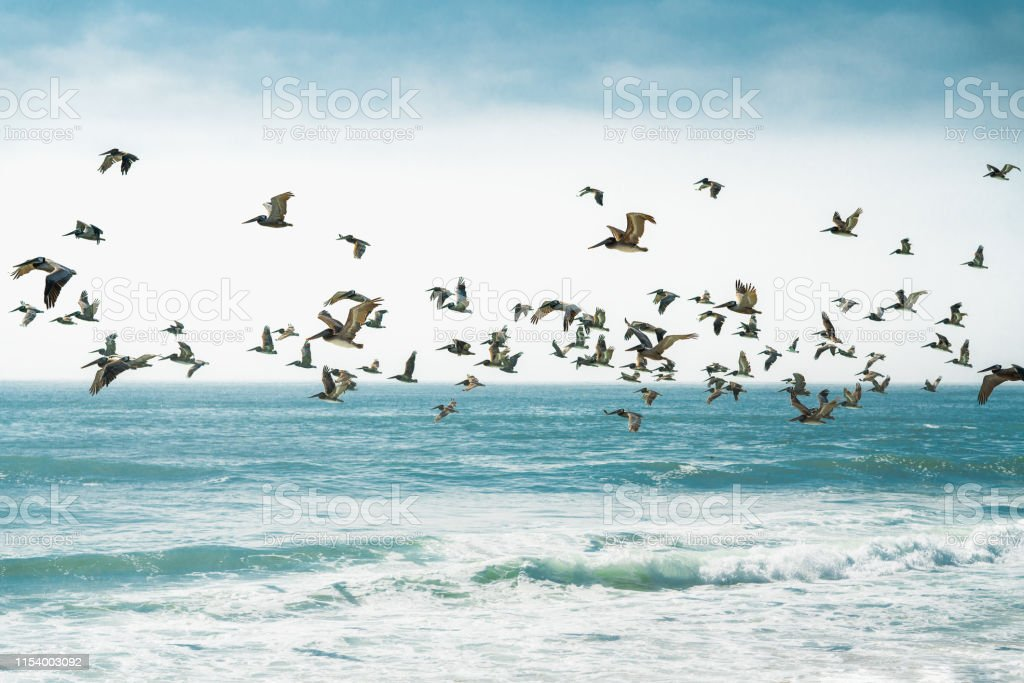 Pelicans Flying over the Ocean, Blue Waves, Blue Sky Background
