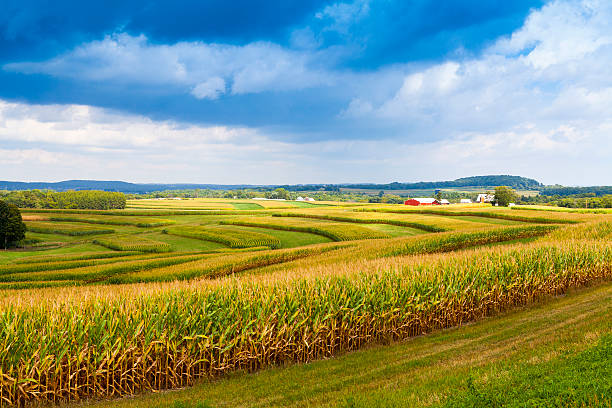 Stormy sky over corn field in American countryside American Countryside Corn Field With Stormy Sky wisconsin stock pictures, royalty-free photos & images