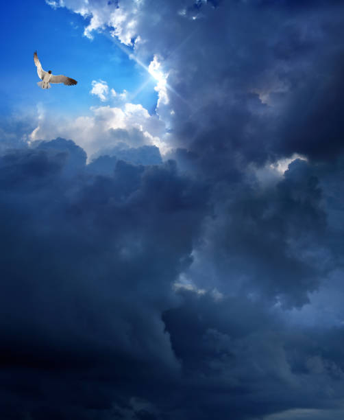 stormy sky with sunbeam and flying bird stock photo