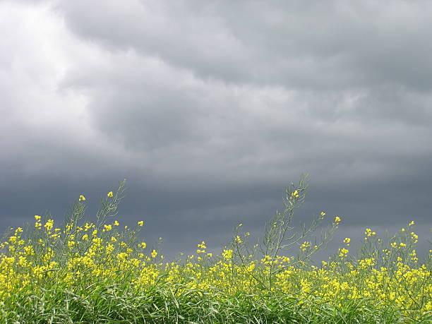 stormy spring day