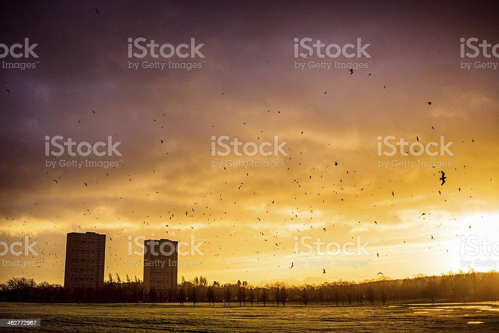 Stormy Sunrise stock photo