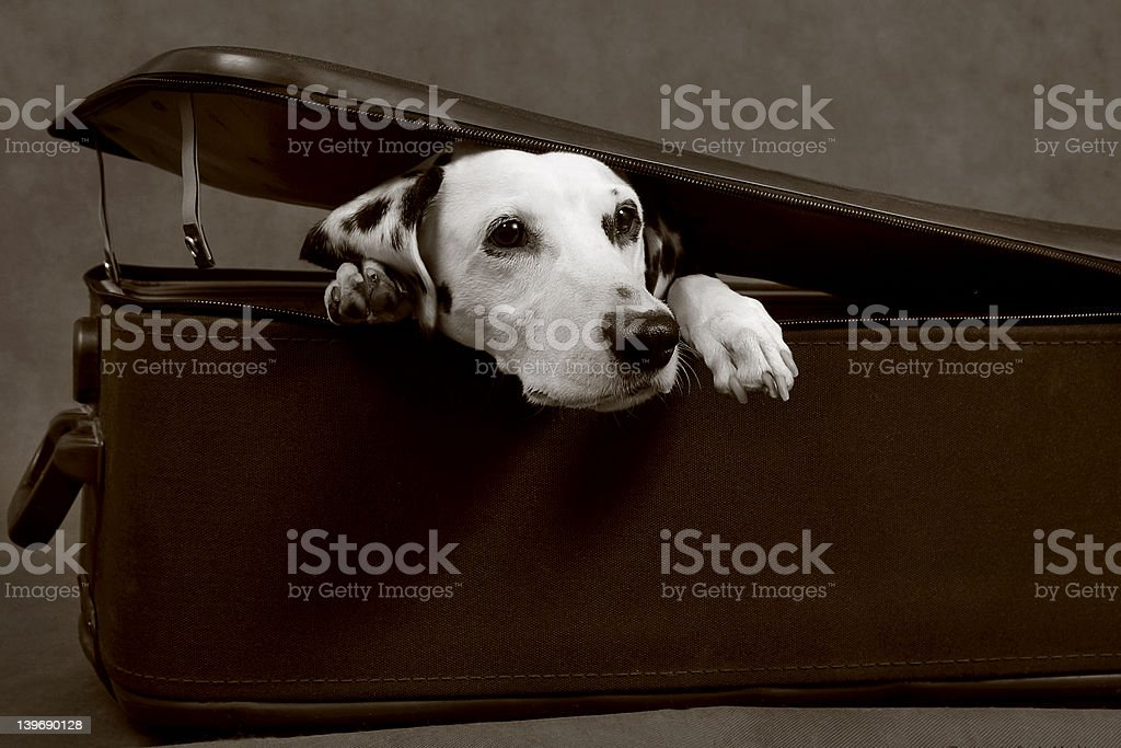 Story about traveller royalty-free stock photo