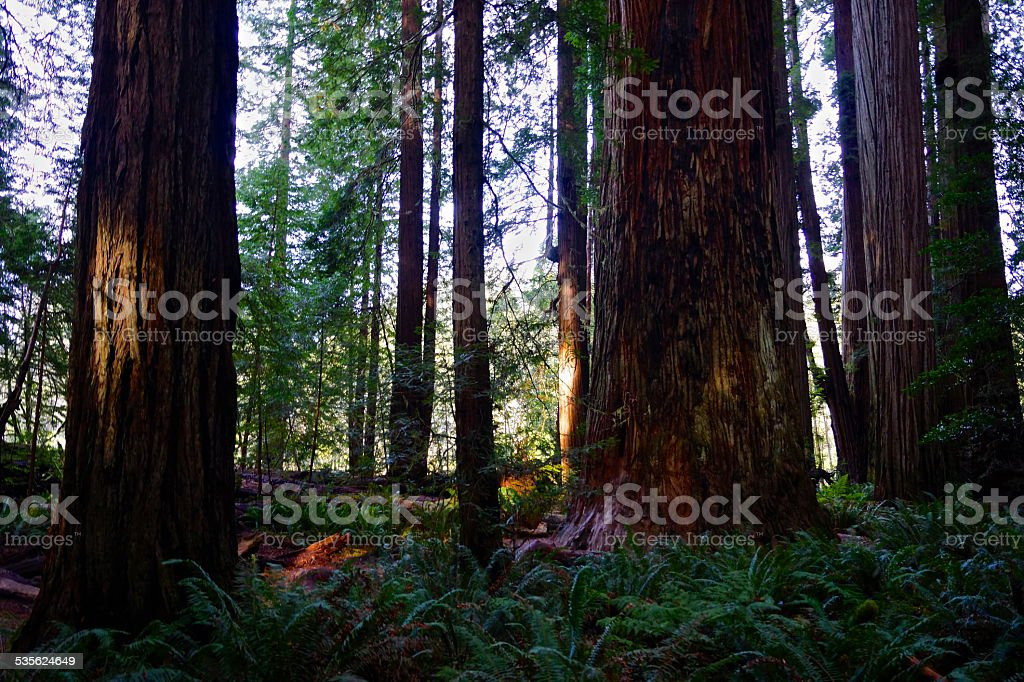 Stout Grove Afternoon stock photo