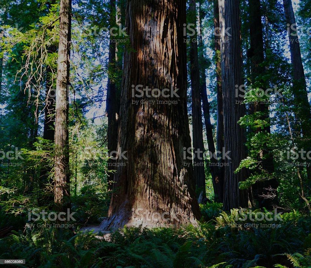 Stout Tree Shadows stock photo