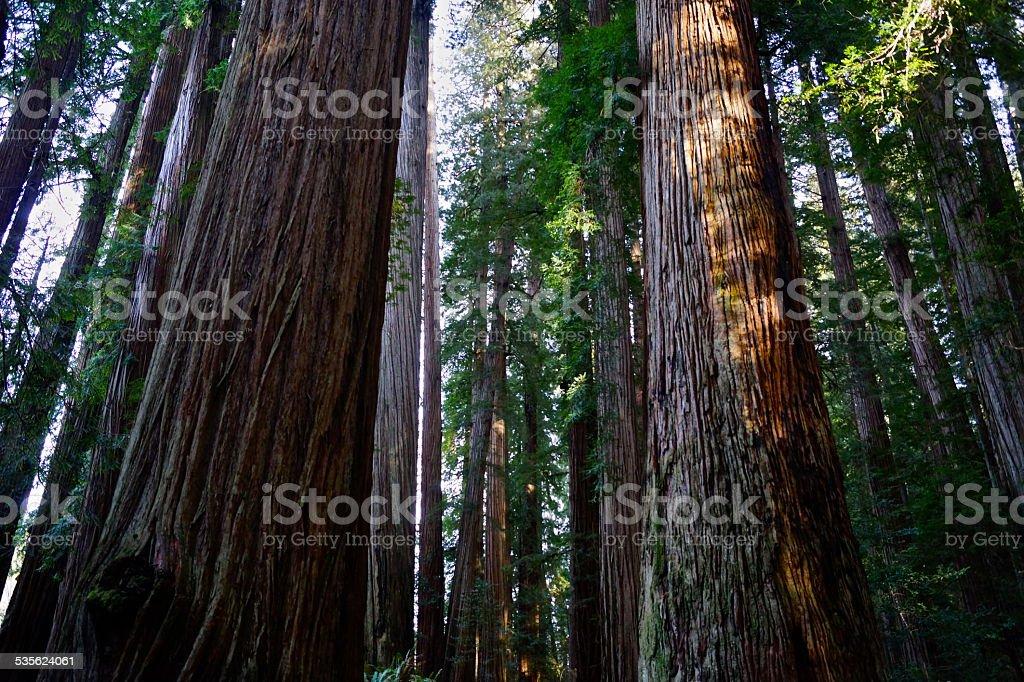 Stout Tree Vert stock photo