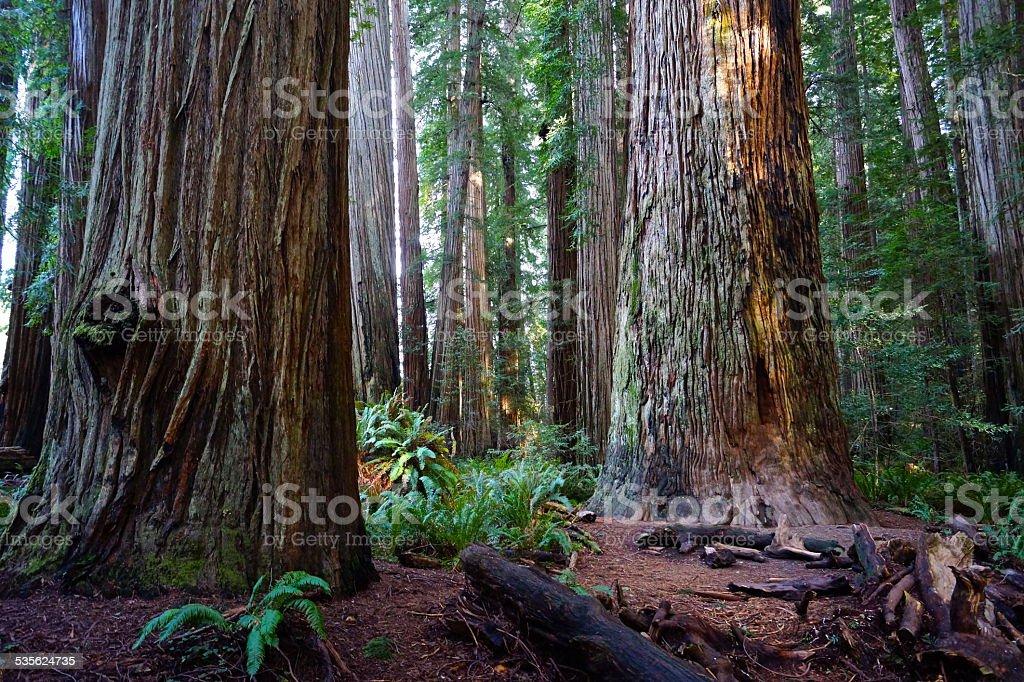 Stout Tree Zone stock photo