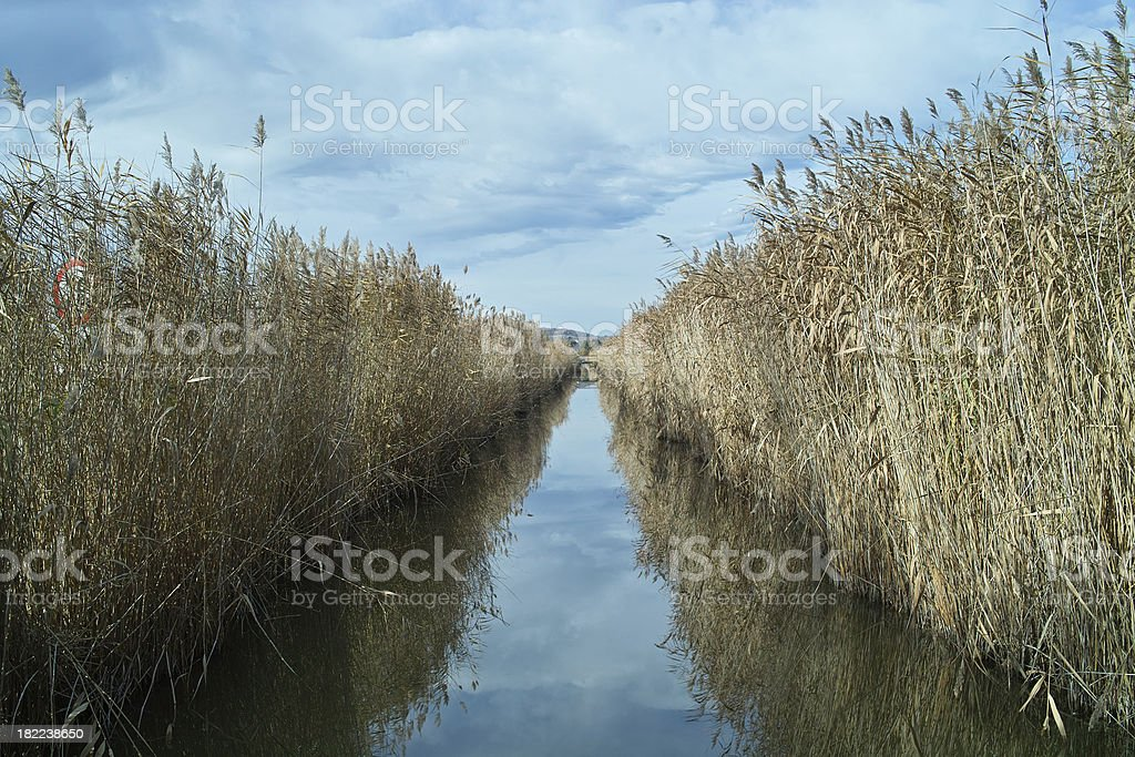 Straight channel with reed royalty-free stock photo