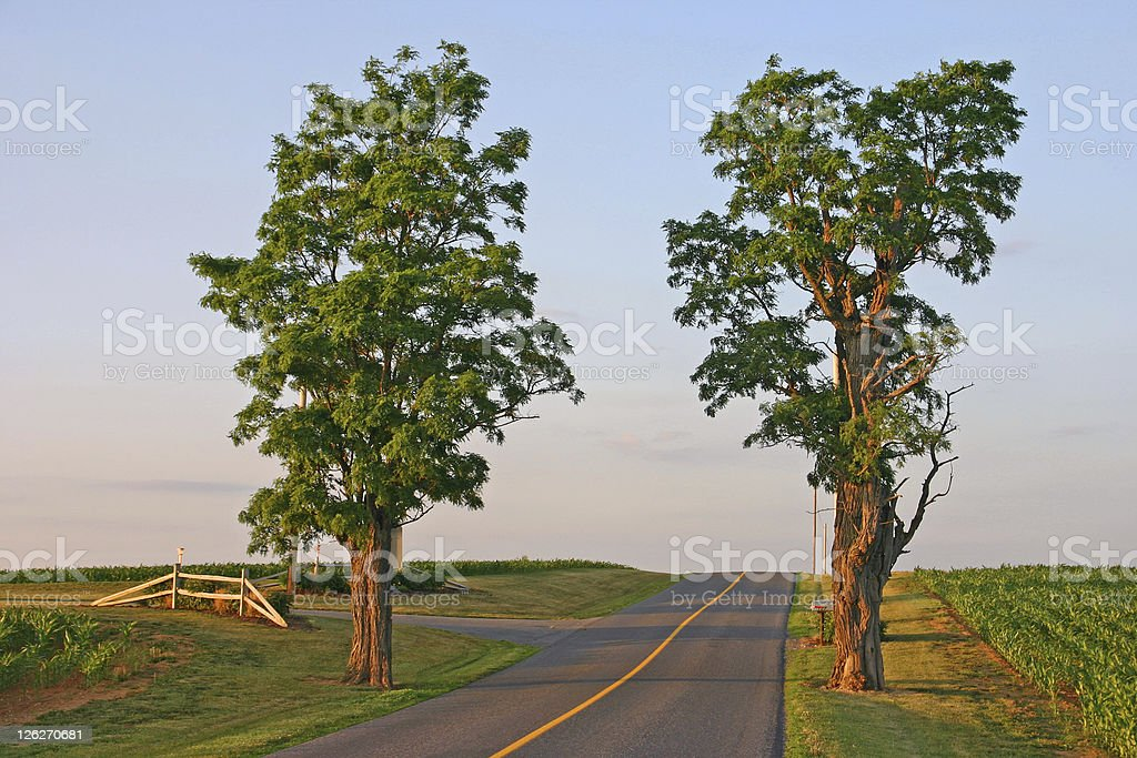 Straight country road with two trees in the evening sun royalty-free stock photo