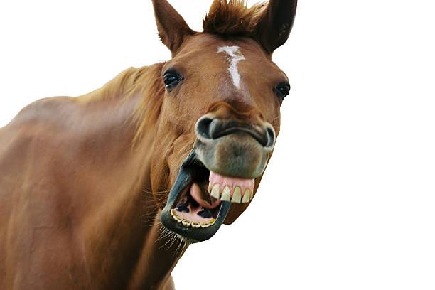 aus der pferde mund (isoliert - lustige pferde stock-fotos und bilder