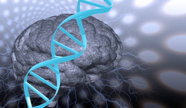 DNA strand and brain stock photo