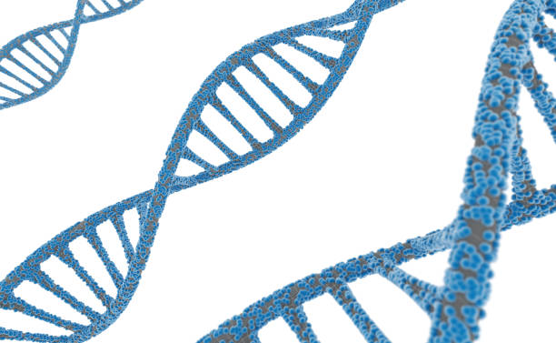 DNA strand carrying biological information stock photo