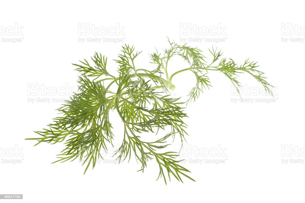 Strand of green leaves over a white background royalty-free stock photo