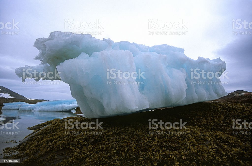Stranded iceberg on bed of seaweed royalty-free stock photo