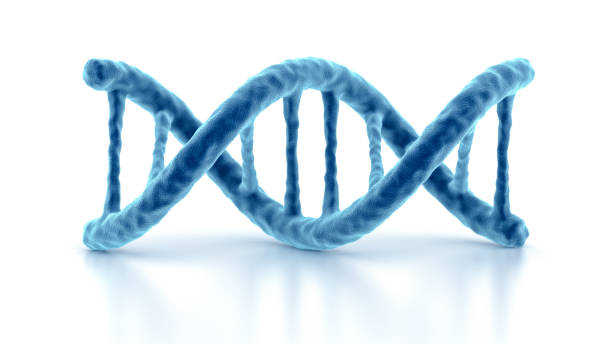 DNA strands. Double helix structure. Isolated on the white background. DNA strands. Double helix structure. Isolated on the white background. nucleotide stock pictures, royalty-free photos & images