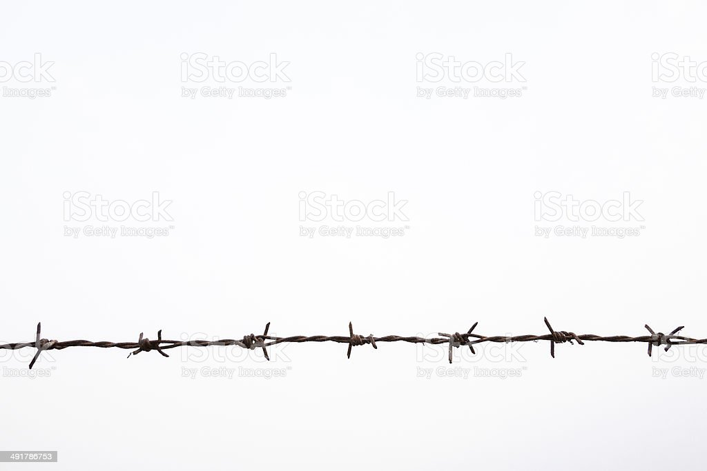 Strands of barb wire isolated against white stock photo