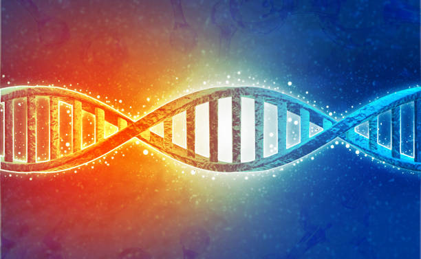 DNA strands on science background stock photo