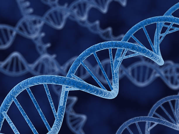 Brins d'ADN - Photo