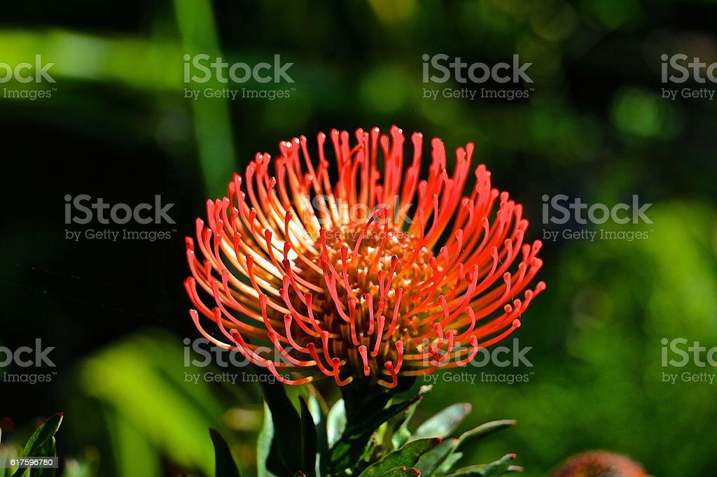 Strange Flower stock photo