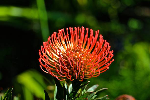 strange flower - aleks66 stock pictures, royalty-free photos & images
