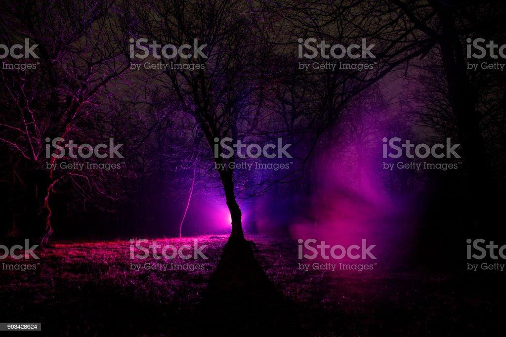 lumière étrange dans une sombre forêt pendant la nuit. Silhouette de personne qui se trouve dans la forêt sombre avec la lumière. Nuit en forêt en temps de brouillard. Scène de nuit surréaliste de forêt. Concept d'halloween horreur. - Photo de Arbre libre de droits