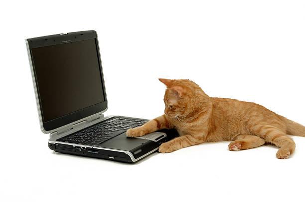 Strange mouse picture id91568106?b=1&k=6&m=91568106&s=612x612&w=0&h=7uunin1ztxw0cielvsp6a8umrjfmqys4wsq5t rebdq=