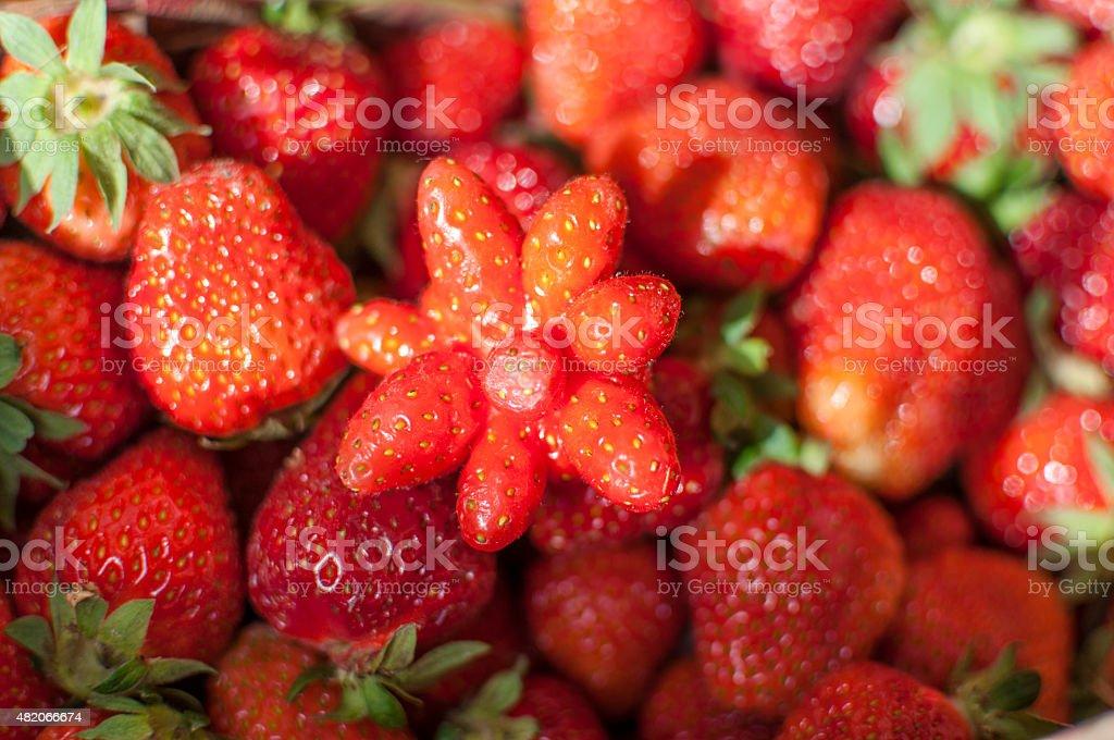 Strange strawberry stock photo
