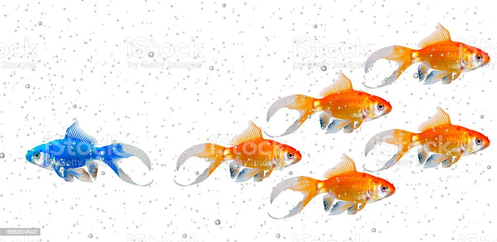 Strategy with Bubbles stock photo