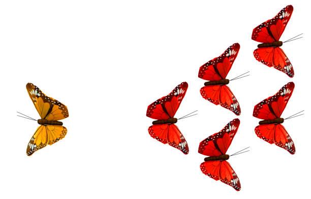Strategy with butterflies picture id697008802?b=1&k=6&m=697008802&s=612x612&w=0&h=ocem3fwr5jynaj6nzarghkvi8 32iwuwiuuklsnjaeo=