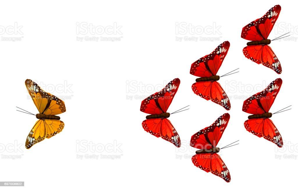 Strategy with Butterflies stock photo