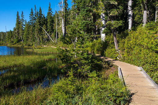 Paradise Meadows trail located at Mount Washington on central Vancouver Island. A popular destination any time of year.